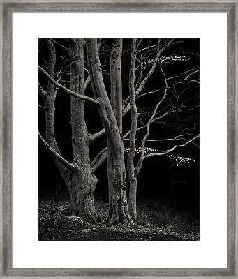 Beech Tree Framed Print by Dave Bowman