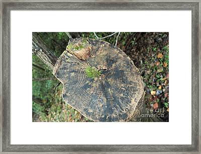 Tree Stump Framed Print by Amy Wilkinson