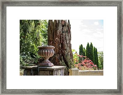Tree Stump And Concrete Planter Framed Print