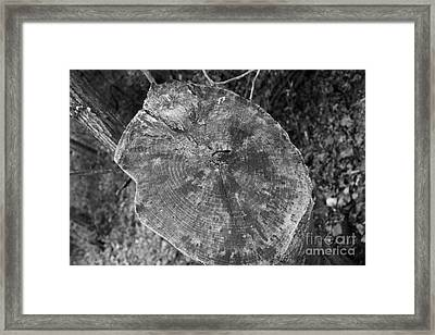 Tree Stump - Black And White Framed Print by Amy Wilkinson