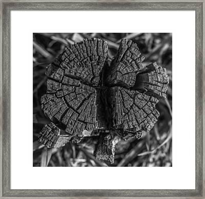 Tree Stump Black And White Framed Print by Richard Cheski
