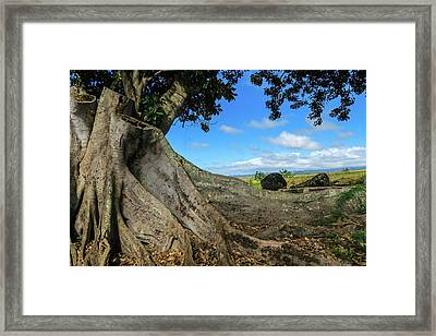 Tree Stump Framed Print by Jera Sky