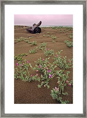 Tree Stump On Shoreline Framed Print