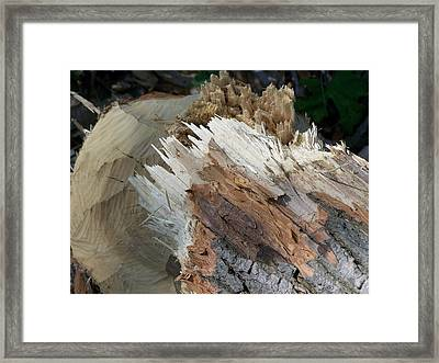 Tree Stump Framed Print