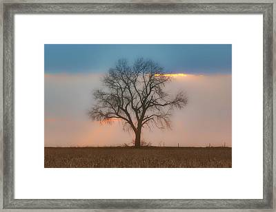 Tree - Sunset Framed Print by Nikolyn McDonald