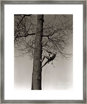 Tree Surgeon Climbing Elm Tree, C.1940s Framed Print by H. Armstrong Roberts/ClassicStock