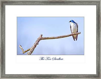 Tree Swallow On Branch Framed Print