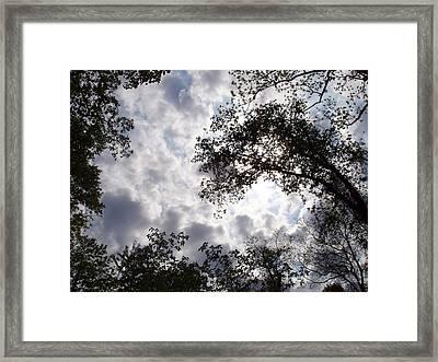 Tree Swirl Framed Print by Deborah  Crew-Johnson