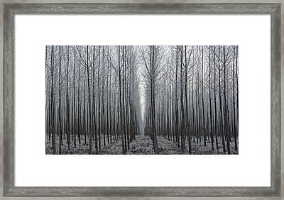 Tree Symmetry Framed Print
