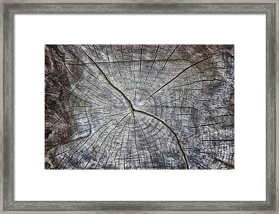 Tree Textures Framed Print