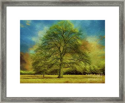 Tree Three Framed Print