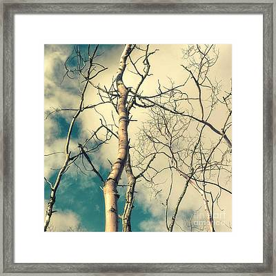 Tree Top 2 Framed Print by Priska Wettstein