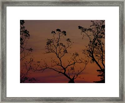 Tree Top After Sunset Framed Print by Donald C Morgan