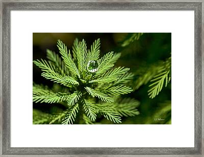 Tree Top Dew Drop Framed Print by Christopher Holmes