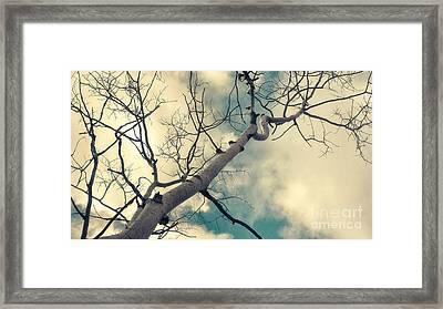 Tree Tops 1 Framed Print