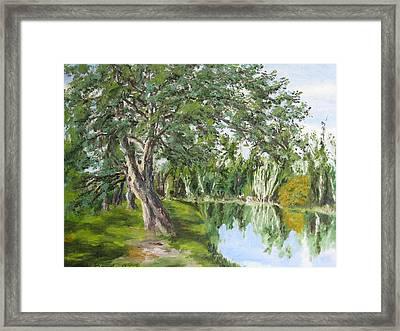 Tree Tops Park Framed Print by Lisa Boyd