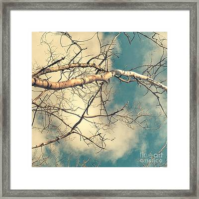 Tree Tops 3 Framed Print