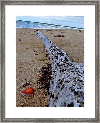 Tree Trunk And Shell On The Beach Full Size Framed Print