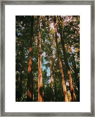 Tree Trunks Framed Print