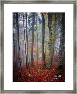 Tree Trunks In Fog Framed Print by Elena Elisseeva