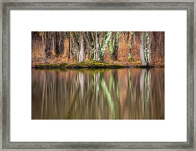Tree Trunks Reflecting Framed Print by Karol Livote