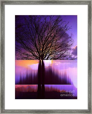 Tree Triptych Framed Print