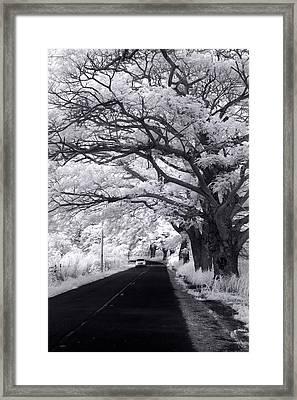 Tree Tube - Vert Framed Print by Sean Davey