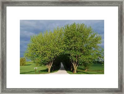 Tree Tunnel Driveway Framed Print by Bill Driscoll