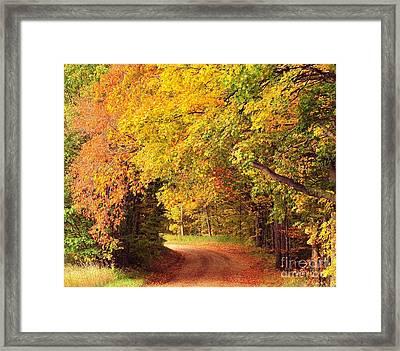 Tree Tunnel Heaven Framed Print by Terri Gostola
