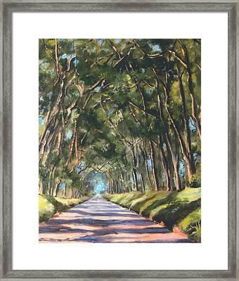 Tree Tunnel Shadwos Framed Print