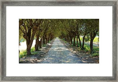 Framed Print featuring the photograph Tree Tunnel by Valentino Visentini