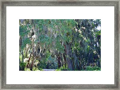 Tree Tunnel Wide Framed Print by Patti Whitten