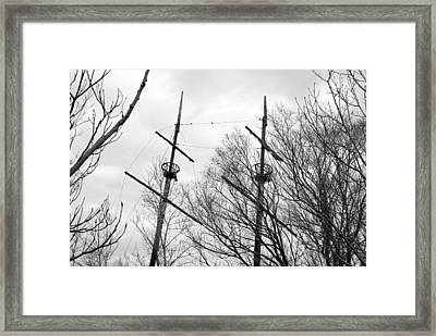 Framed Print featuring the photograph Tree Types by Valentino Visentini