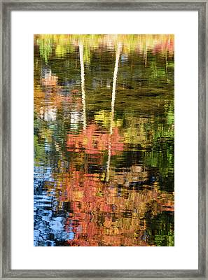 Tree Upside Down Framed Print by Michael Blanchette
