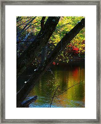 Tree View Framed Print by Joyce Kimble Smith