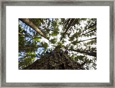 Tree Walkers Framed Print