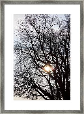 Framed Print featuring the photograph Tree With A Heart by James BO Insogna