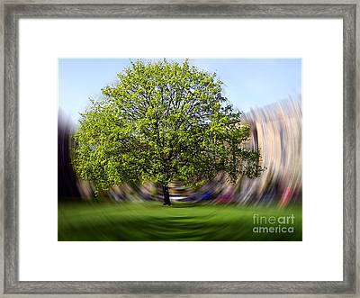 Framed Print featuring the photograph Tree With Animated Surroundings by Sascha Meyer