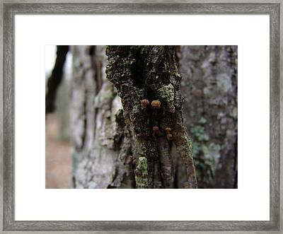 Tree With Small Mushrooms 001 Framed Print by Ryan Vaal