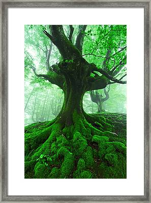 Tree With Twisted Roots In Foggy Forest Framed Print by Mikel Martinez de Osaba