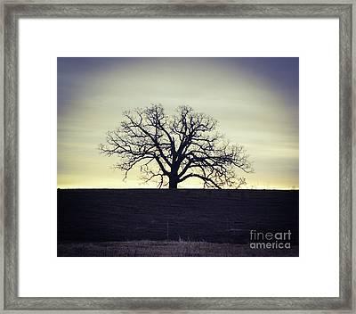 Tree5 Framed Print