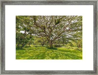 Treebeard Framed Print