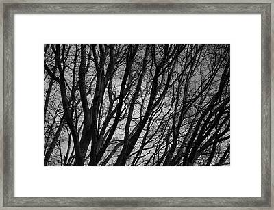 Abstract Branches Framed Print by Marilyn Wilson