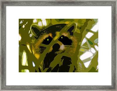 Treed Raccoon Framed Print by David Lee Thompson