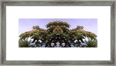 Treegate Neos Marmaras Framed Print