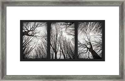 Treeology Framed Print by Dorit Fuhg
