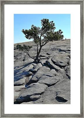 Trees 11 14 Framed Print
