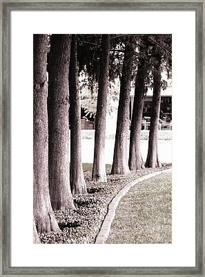 Trees 2 Framed Print by Gracey Tran