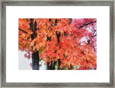 Trees Aflame Framed Print by Jeff Kolker