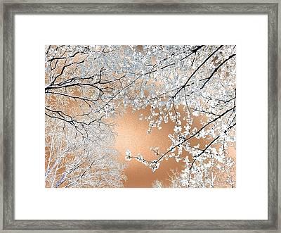 Blossoms #02 Framed Print by Ninie AG